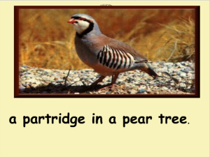 A_Partridge_in_a_Pear_Tree